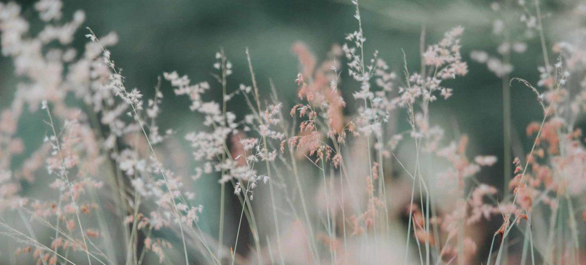 Endometriose und Therapie